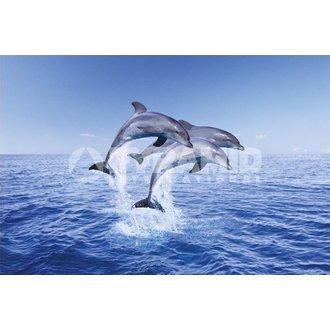 plagát Dolphin Trio - Pyramid Posters, PYRAMID POSTERS